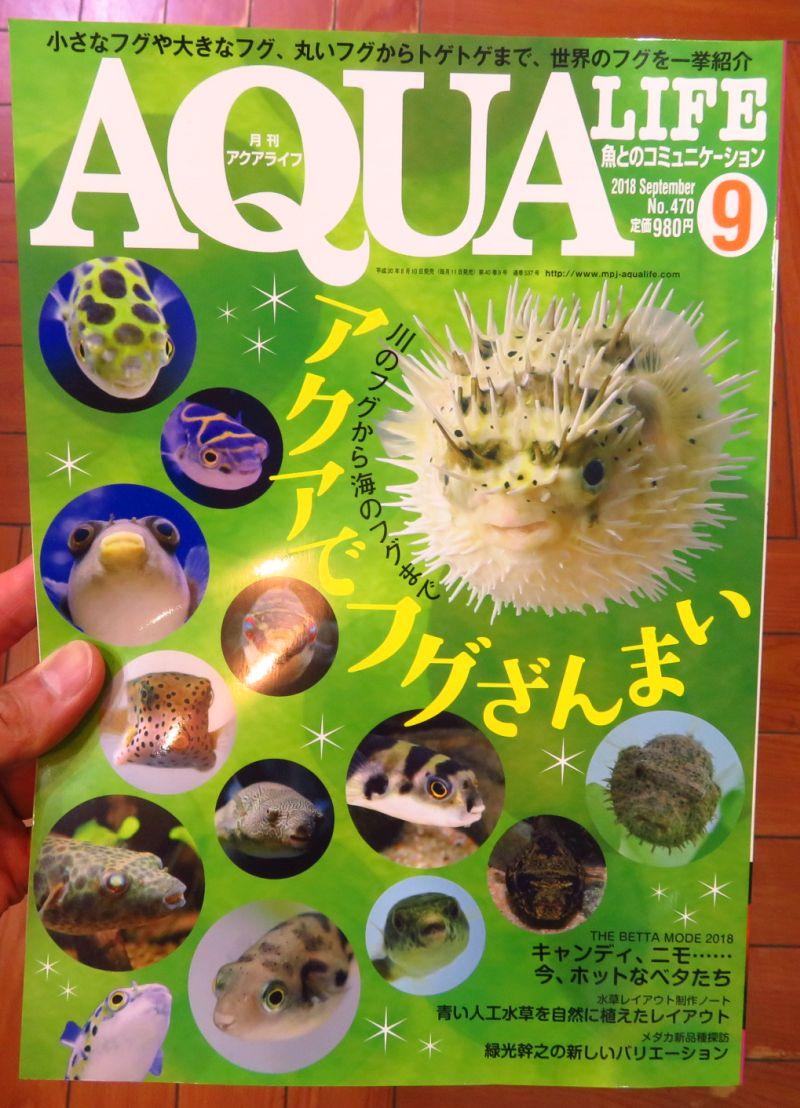 【新宿店】月刊アクアライフ、アクアジャーナル入荷しました!