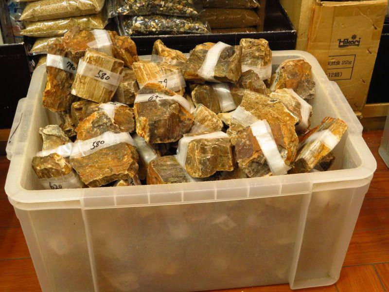 【新宿店】木化石、アク抜き流木ミニサイズが入荷いたしました!