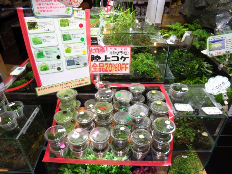 【新宿店】陸上ゴケ20%OFFセール開催中です!