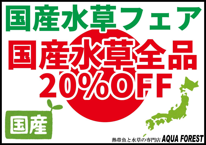 【新宿店】国産水草フェア開催中です!