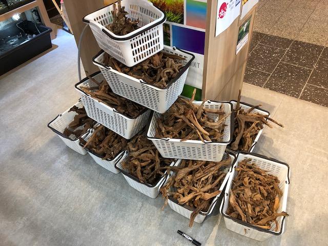 【ソラマチ店】流木600本