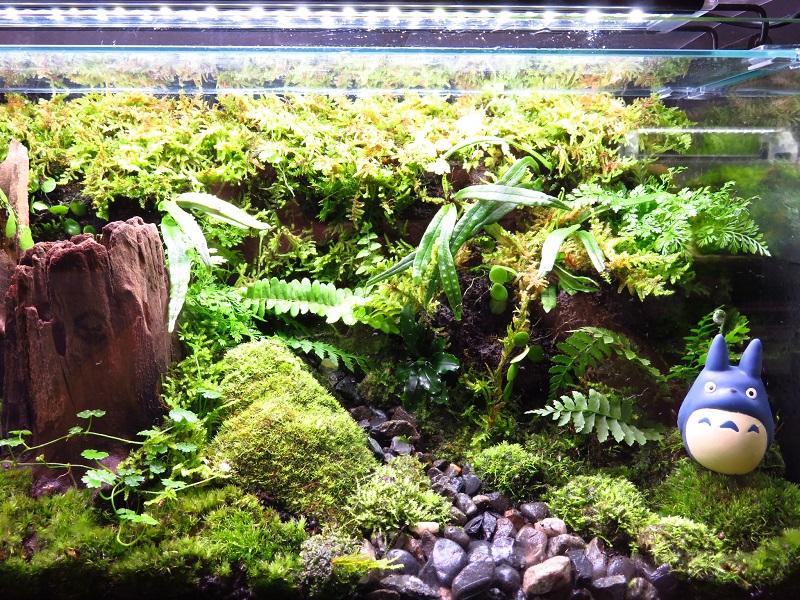 【新宿店】10月27日(土)森の寺子屋「20㎝水槽でコケリウムを作ろう!」ちょっとお得です♪♪