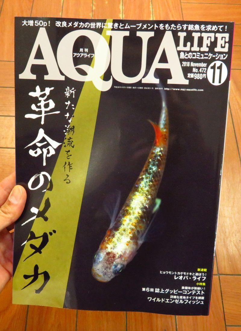 【新宿店】アクアライフとアクアジャーナル入荷しました!