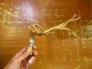 【新宿店】ブラウンブランチ流木入荷しました。