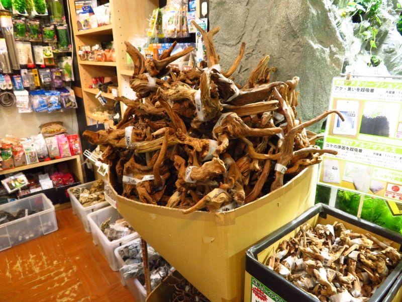 【新宿店】スティック系流木たくさん入荷しました!