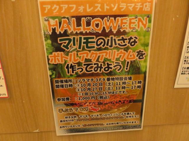 【ソラマチ店】ハロウィンを楽しむ