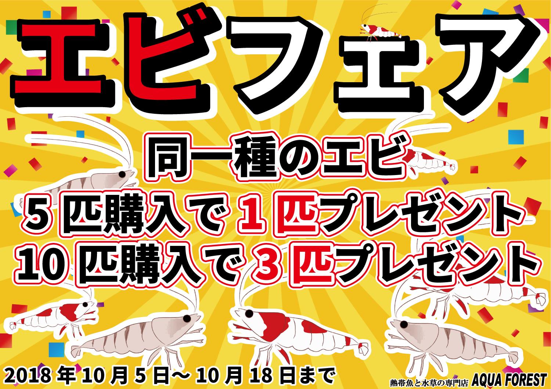 【新宿店】生体セールのご案内と10月4日現在 生体在庫ご紹介 エビ編