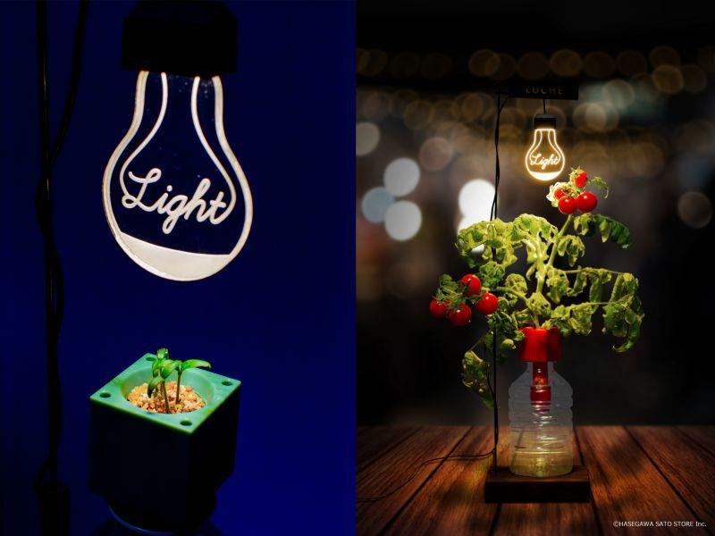 【ソラマチ店】とってもおしゃれな植物育成ランプが登場!※ソラマチ店先行販売!