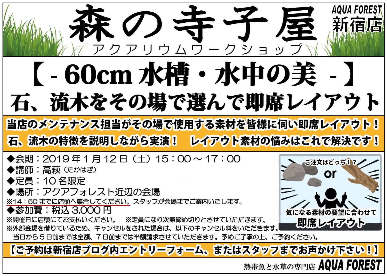 【新宿店】2019年1月12日(土)森の寺子屋「60cm水槽・水中の美」開催します!!