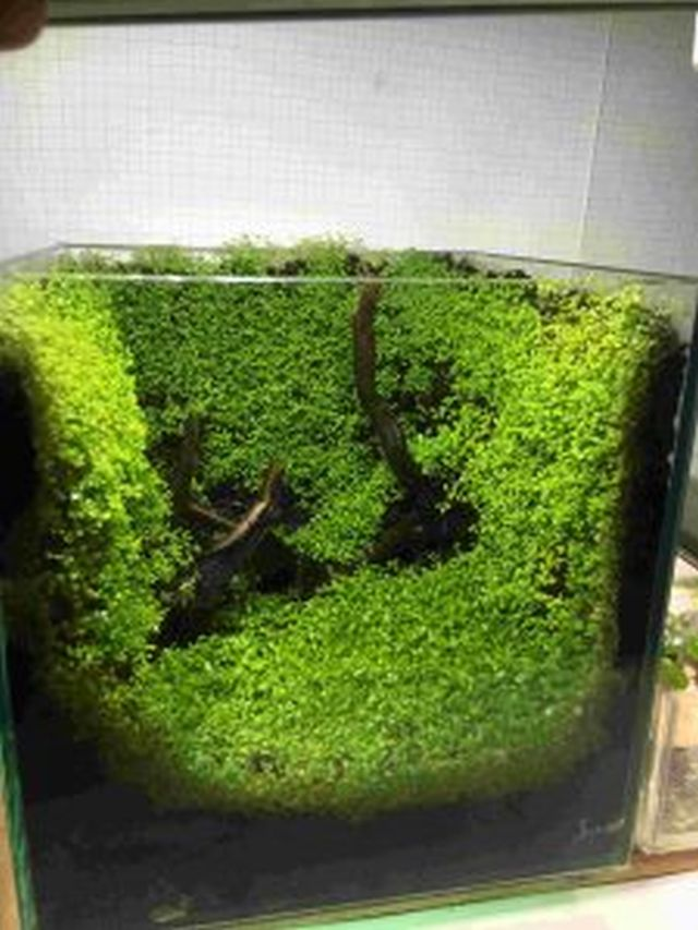【ソラマチ店】水草の種、お求めやすくなって再登場!