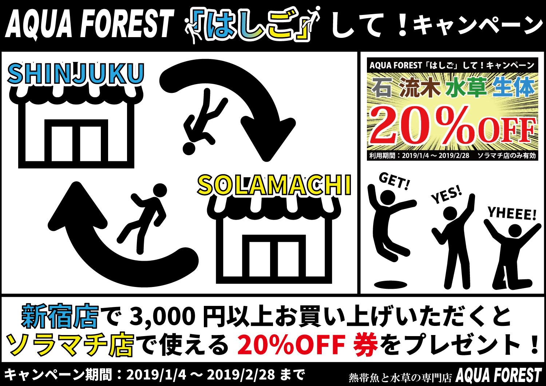 【ソラマチ店】強烈なるイベントと流木の入荷。