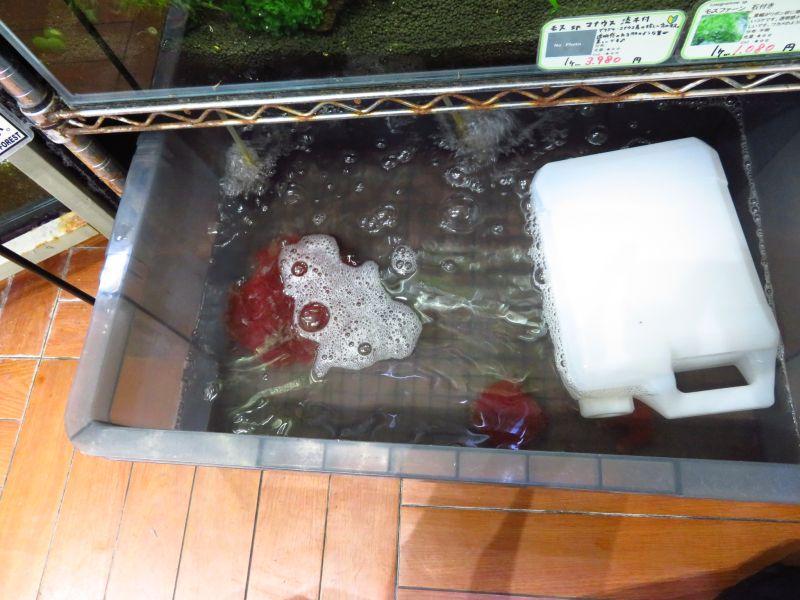 【新宿店】ヤゴにも人気の活イトメ、メダカの好物活タマミジンコ、稚魚の餌用活ゾウリムシ販売中です