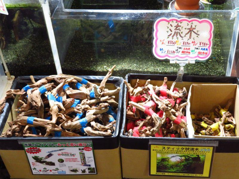 【新宿店】アクぬき流木10~20センチ入荷しました