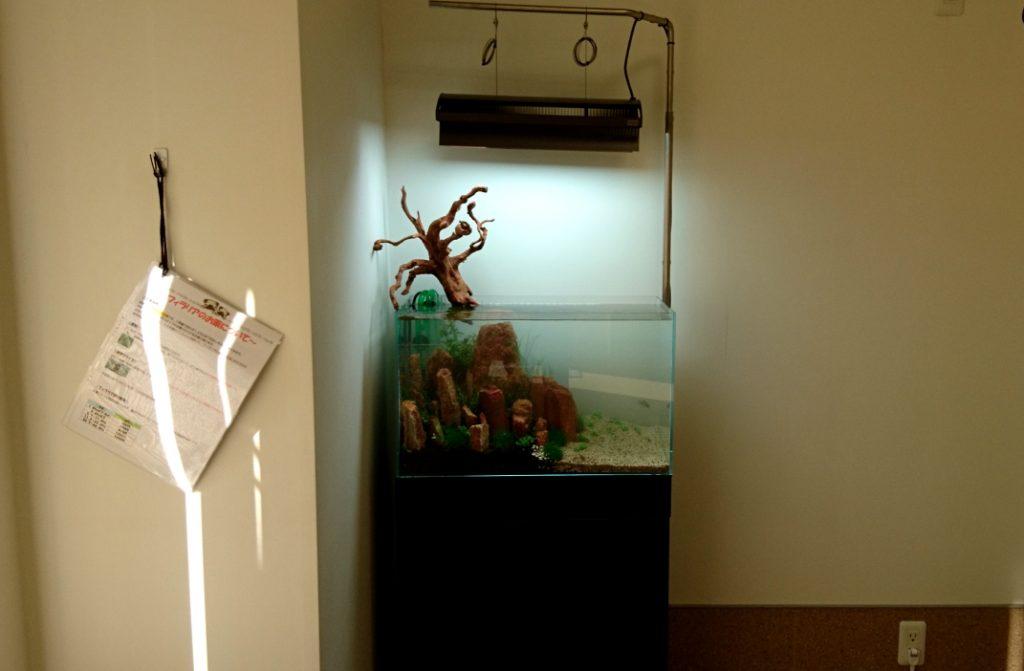 【メンテナンス】60cm水槽の設置に行って参りました!