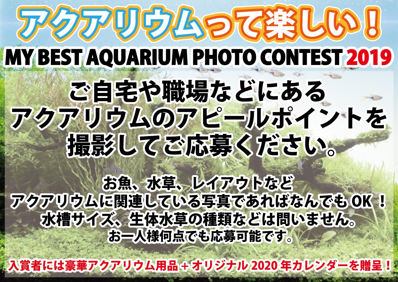 今日まで!もうすぐ締め切り!「アクアリウムって楽しい!MY BEST AQUARIUM PHOTO CONTEST 2019」