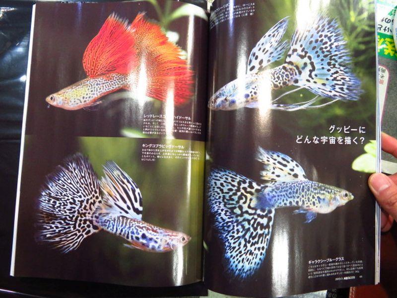 【新宿店】月刊アクアライフ入荷しました!&夜に魚入荷予定です