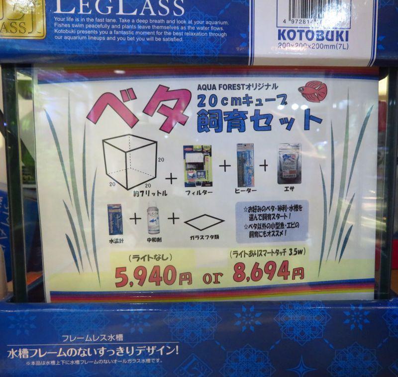 【新宿店】20センチキューブ水槽でお魚飼育を始めてみよう!