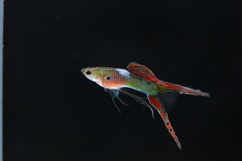 【新宿店】写真付きお魚紹介です♪