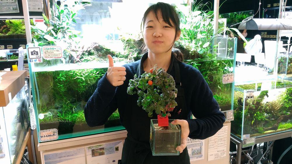 【新宿店】ポットランド、トマトが実った!