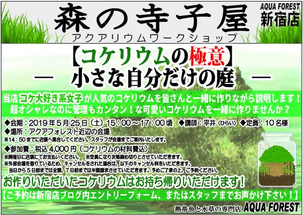 【新宿店】2019年5月25日(土)森の寺子屋ーコケリウムの極意 小さな自分だけの庭ーを開催します!!