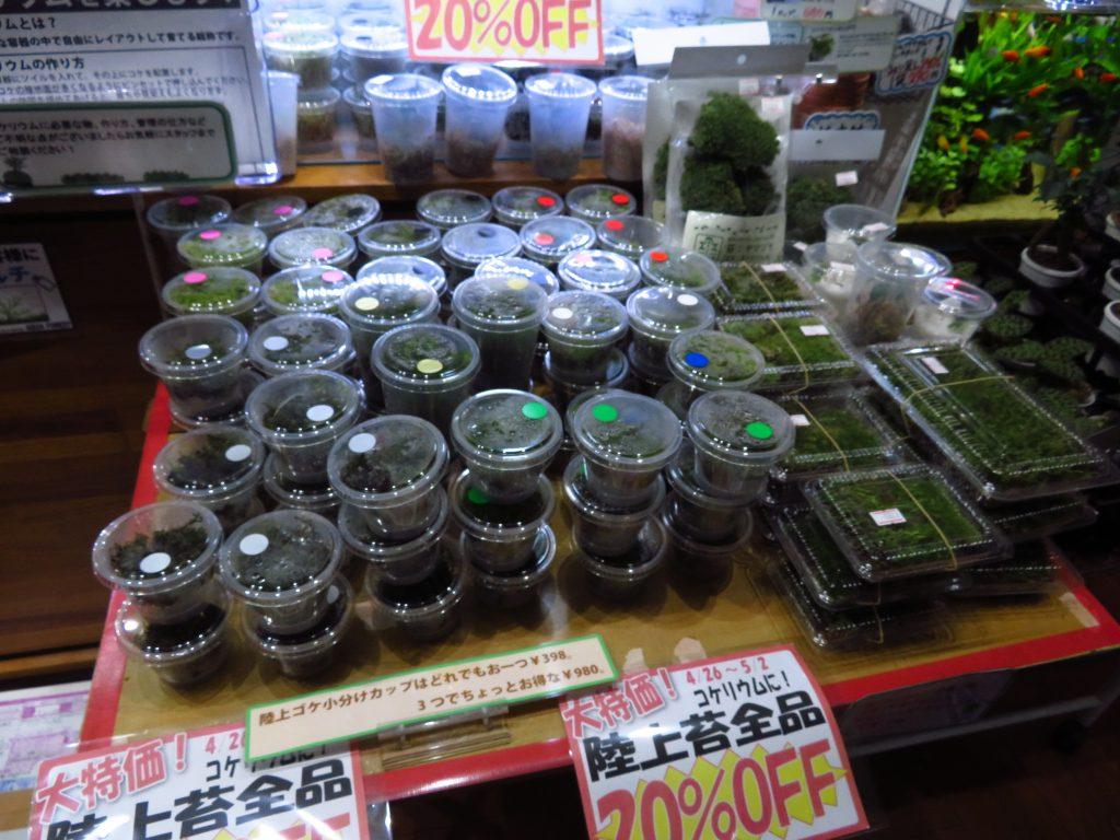 【新宿店】陸上苔の特別セール♪