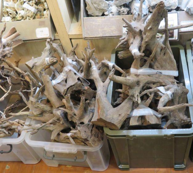 【新宿店】底カット流木が入荷しました!