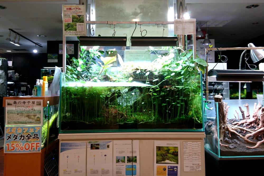 【新宿店】店頭120cm水槽今昔