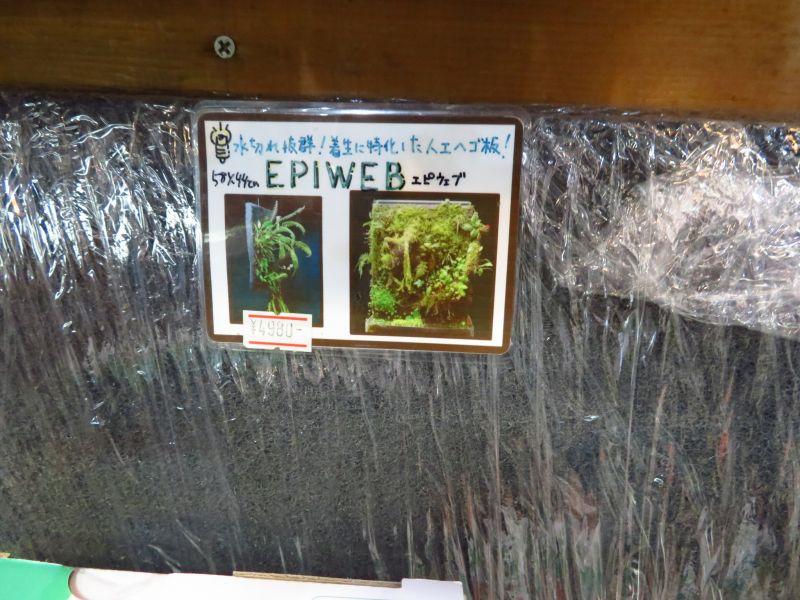 【新宿店】パルダリウム商品のエピウェブが入荷しました!