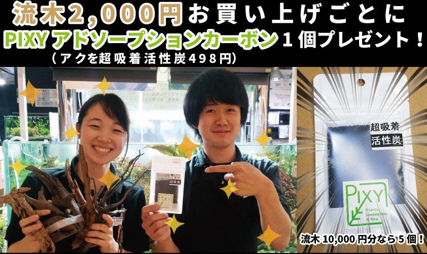 【新宿店】PIXYカーボンキャンペーン開催!7月1日~