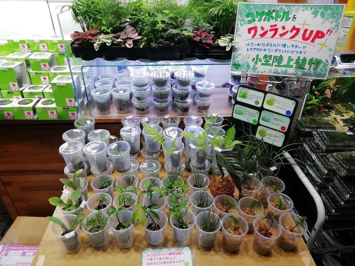 【新宿店】陸上植物特設コーナーつくりました!!