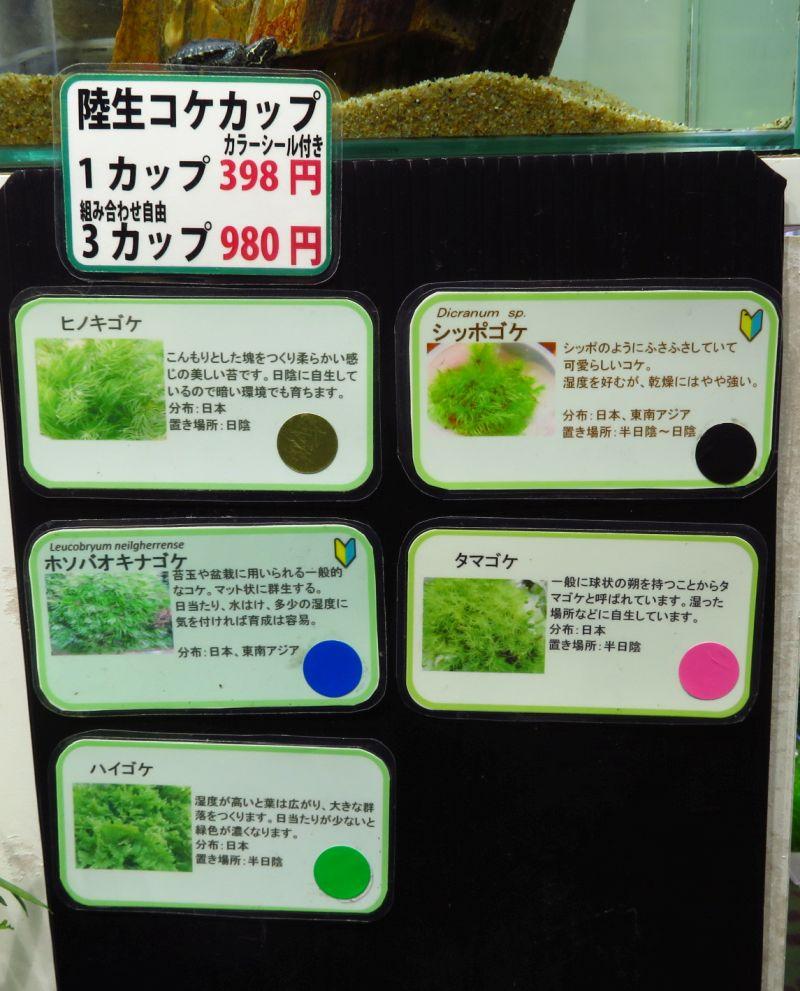 【新宿店】コケカップ、ミニ観葉植物充実中です