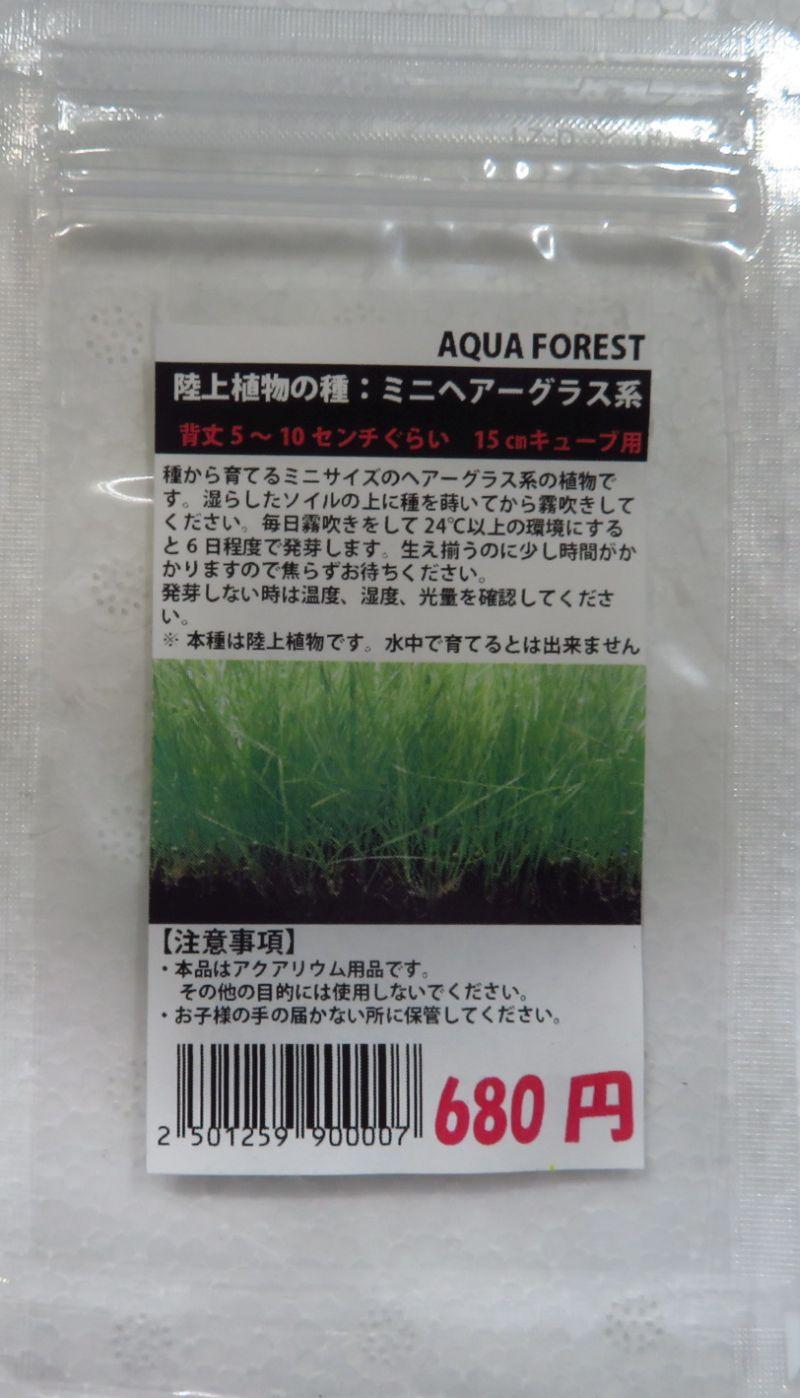 【新宿店】植物の種 ミニヘアーグラス発売開始!