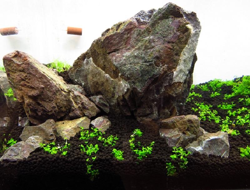 【新宿店】30cmキューブ水槽を制作しました