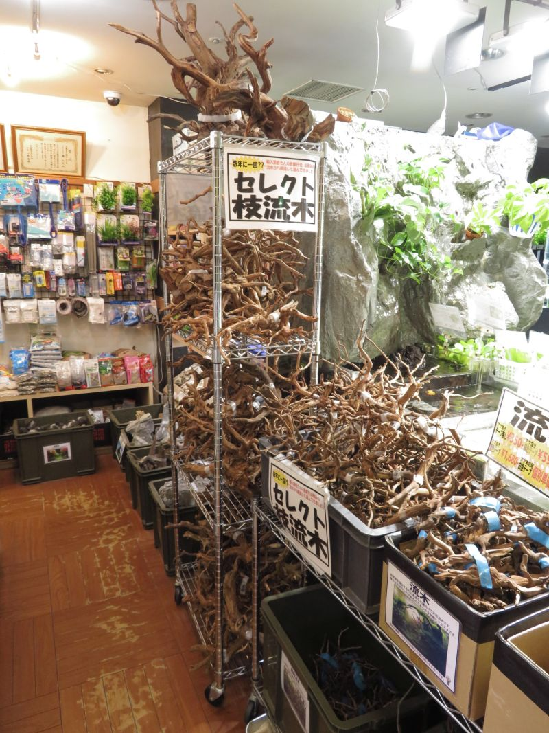 【新宿店】枝流木入荷しました