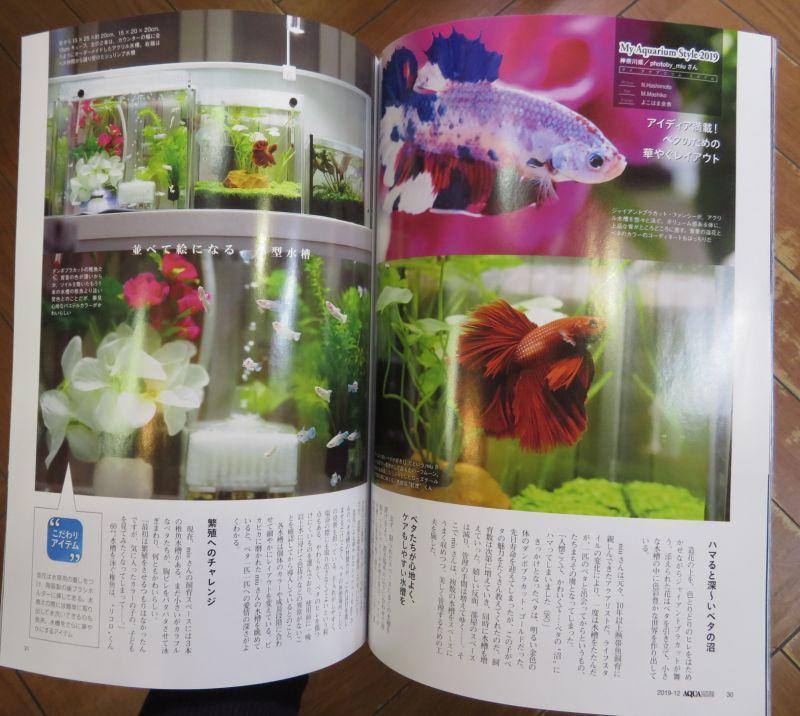 【新宿店】月刊アクアライフ入荷しました!