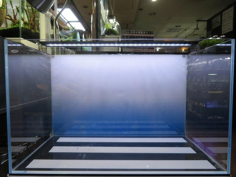 【新宿店】60cm水槽立ち上げました