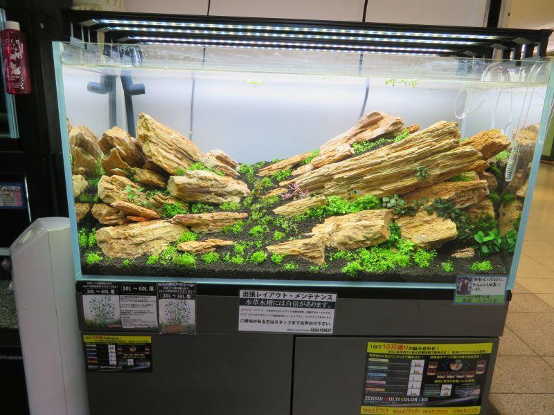 【新宿店】展示水槽を増やしました!