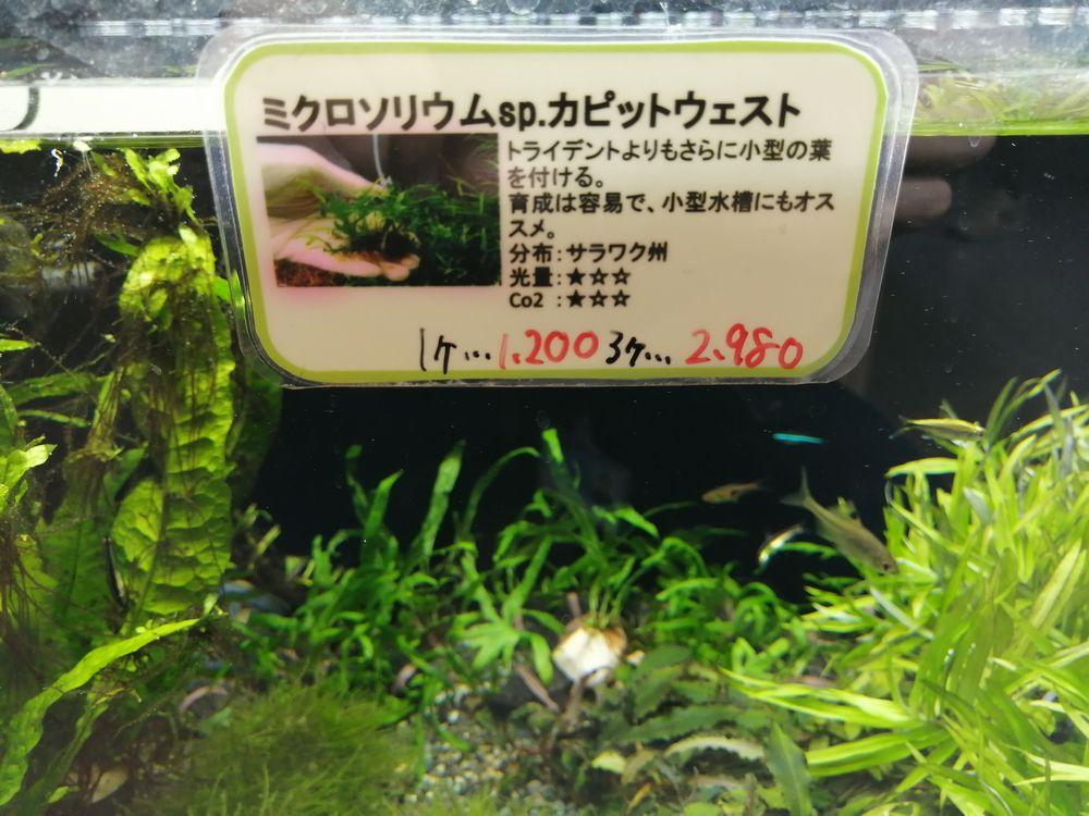 【ソラマチ店】ちょっとレアなミクロ!カピット(ちょこっと)だけ入荷!
