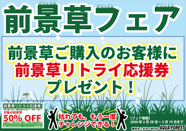 【新宿店】前景草フェア開催!失敗を恐れず挑戦しましょう!