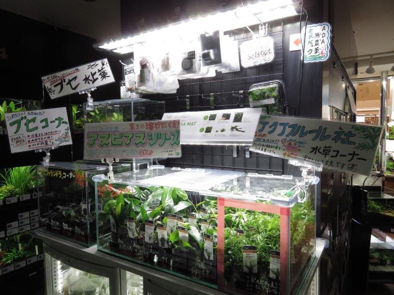 【新宿店】アクアフルール活着草祭り