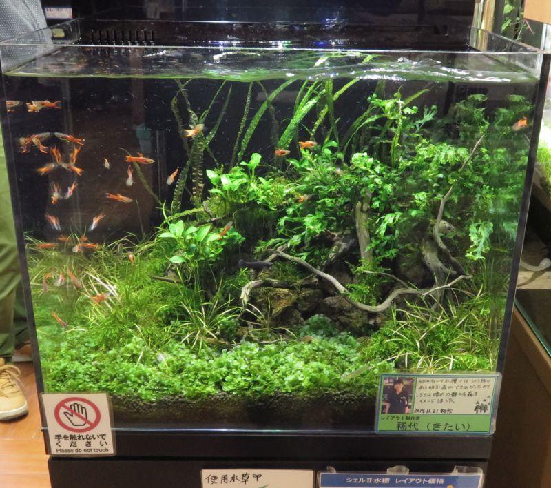 【新宿店】水草の絨毯はモス系でも作れます!