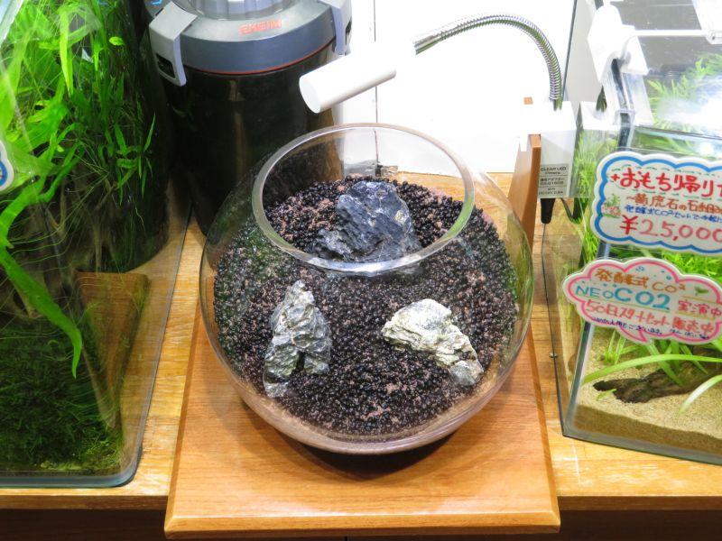 【新宿店】簡単!種まき水草を使ってみよう