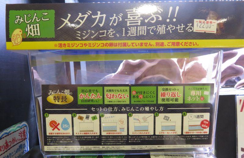 【新宿店】みじんこ培養セット 展示水槽の繁殖状況