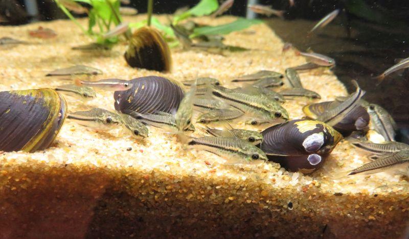 【新宿店】ちょっとだけお魚のご紹介