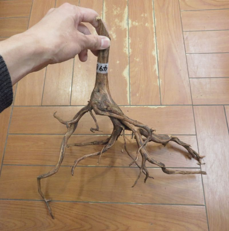【新宿店】大きめの枝流木入荷!