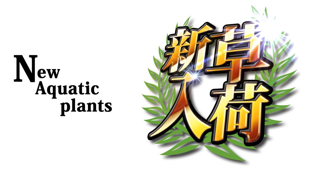 【新宿店】陸上植物、全員集合!