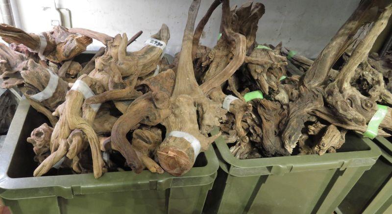 【新宿店】流木が入荷しました!