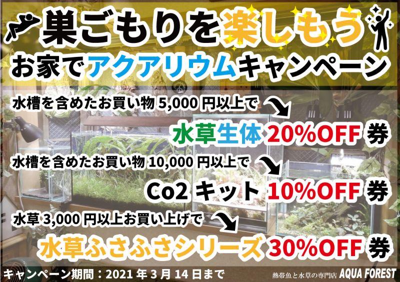 【新宿店】お家でアクアリウムキャンペーン!