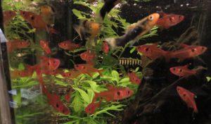 【新宿店】水草、お魚の入荷を一部ご紹介