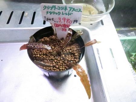 2/21最新水草情報!